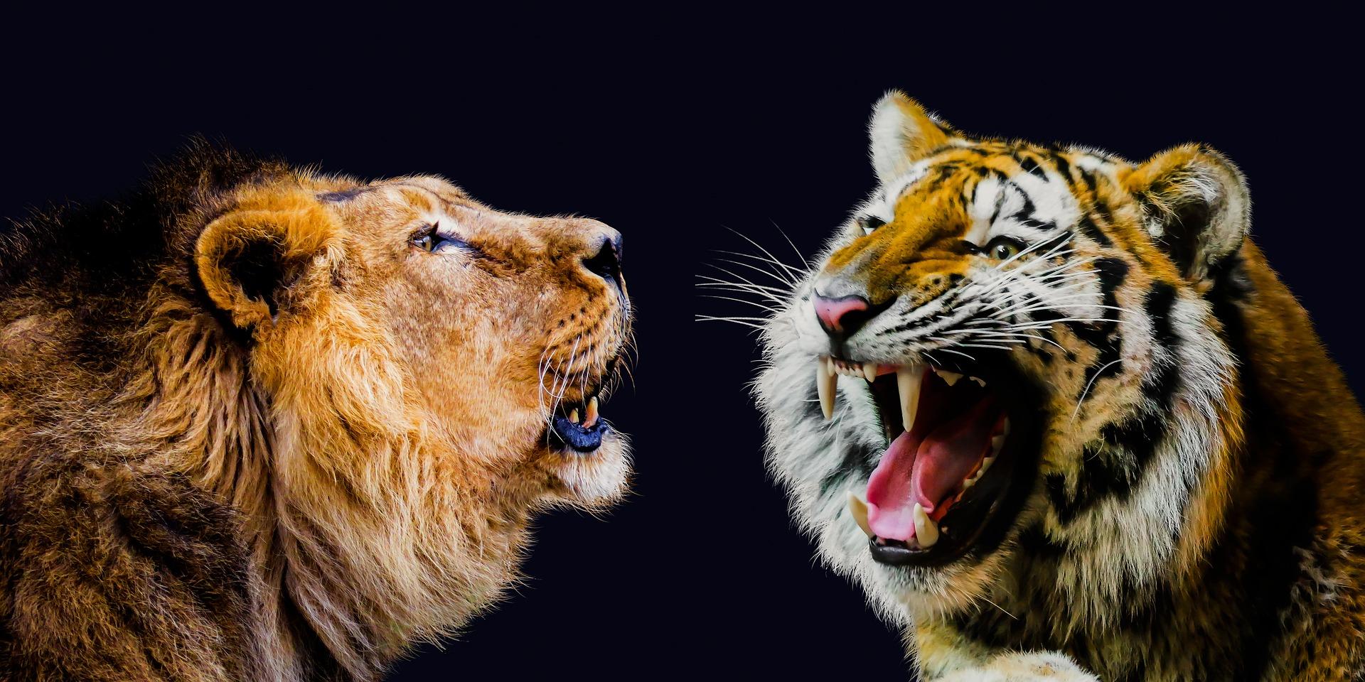 ¿Cuál es más fiero, el león o el tigre?